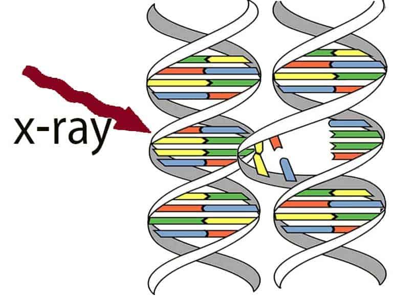 רגישות גנטית לקרני רנטגן