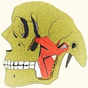 כאבים בלסת גורמים וגורמי סיכון