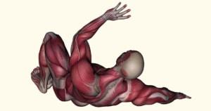שרירים בגוף האדם מבנה ותפקוד