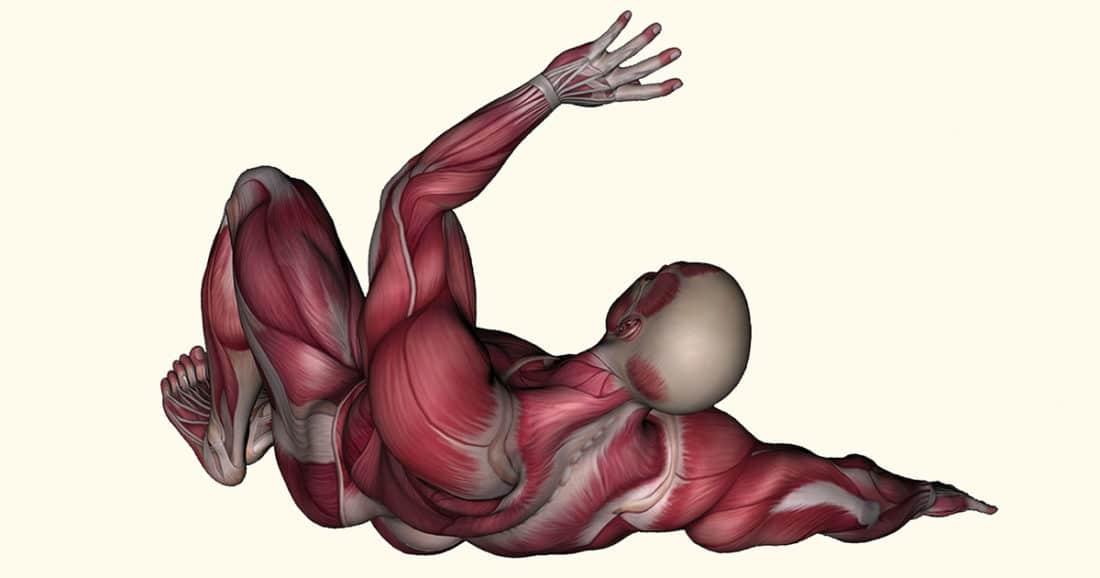 שרירים בגוף האדם