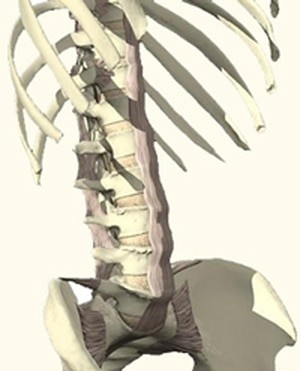 בדיקה של עמוד השדרה המותני