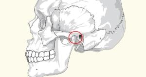 המבנה והתנועה של מפרק הלסת