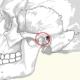 מפרק הלסת אנטומיה ותנועה