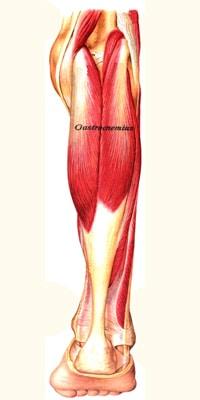 התכווצות שרירים בלילה טיפול