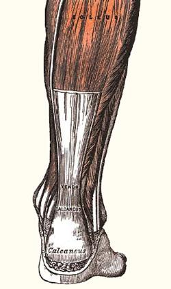 כף רגל שטוחה אבחון וטיפול
