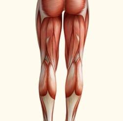 מבנה הרגל אנטומיה וביומכניקה