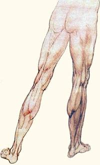 כאבים בירך גורמי סיכון