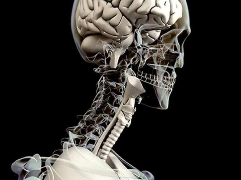 מבנה הצוואר אנטומיה וביומכניקה