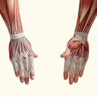 מתיחות לא מונעות פציעות גידים